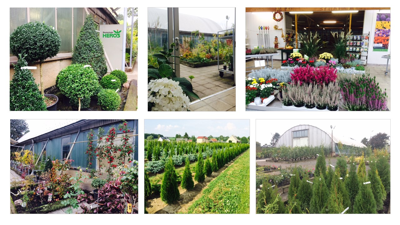Volles Sortiment im Herbst - Pflanzenmarkt in Niedergräfenhain